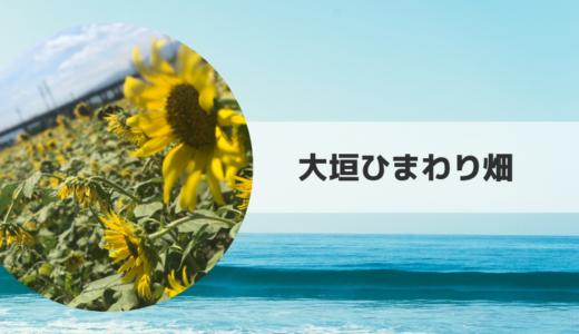 2019|大垣ひまわり畑の見頃時期・開花状況とアクセス方法【岐阜県】