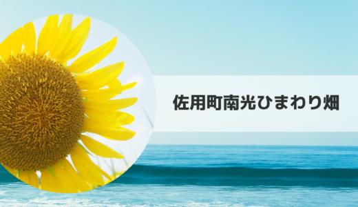 2019|佐用町南光ひまわり畑の見頃時期・開花状況とアクセス方法【兵庫県】