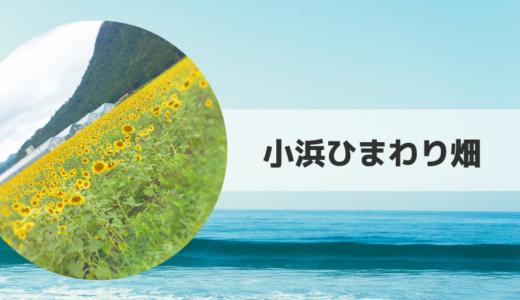 2019|小浜ひまわり畑の見頃時期・開花状況とアクセス方法【福井県】