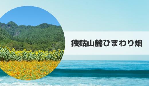 2019|独鈷山麓ひまわり畑の見頃時期・開花状況とアクセス方法【長野県】