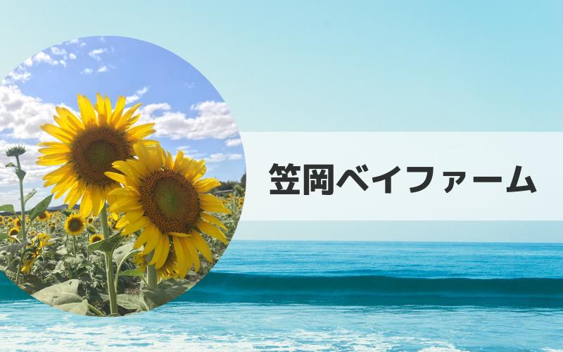 ベイ 2019 ひまわり 笠岡 ファーム