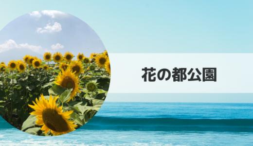 2019|花の都公園ひまわり畑の見頃時期・開花状況とアクセス方法【山梨県】