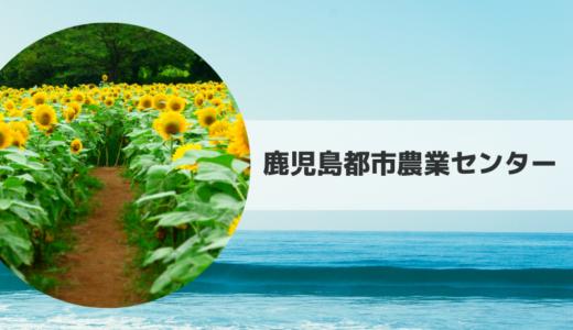 2019|鹿児島都市農業センターひまわり畑の見頃時期・開花状況とアクセス方法【鹿児島県】